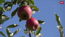 Link öffnet eine Lightbox. Video Apfelbauern bangen um ihre Existenz abspielen