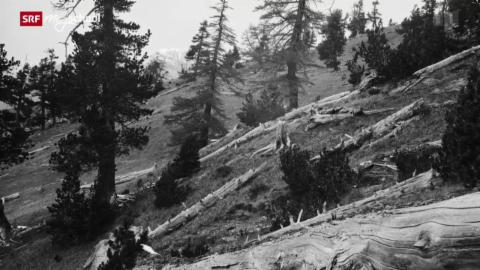 100 Jahre Schweizerischer Nationalpark (4/6)