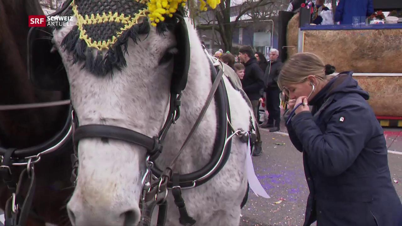 Pferdekontrollen an Basler Fasnacht