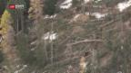 Video «Sturm zerstört Bergüner Schutzwald» abspielen