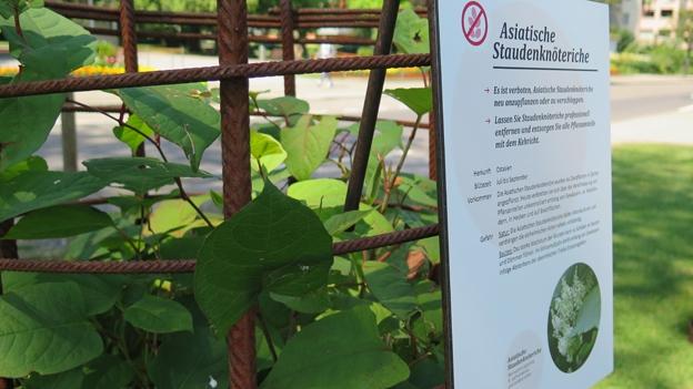 Exoten im Garten - Was tun? Eine Ausstellung.