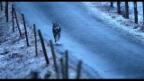 Video «Feuer frei» abspielen