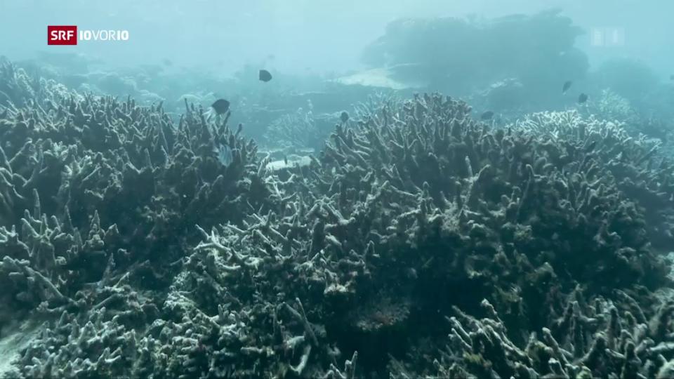Aus dem Archiv: Der Klimawandel setzt dem Great Barrier Reef zu