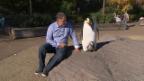 Video «Luc Jacquet: Der Herr der Pinguine» abspielen