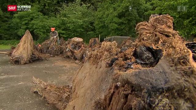 Steinzeitwald in Zürcher Baugrube entdeckt