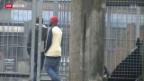 Video «Reizthema «renitente Asylbewerber»» abspielen