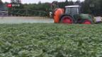 Video «Bauern wollen nicht auf Spritzmittel verzichten» abspielen