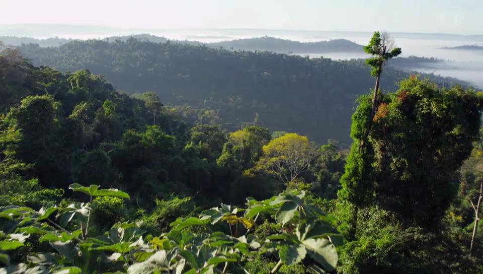 Wildes Brasilien - Der Amazonas