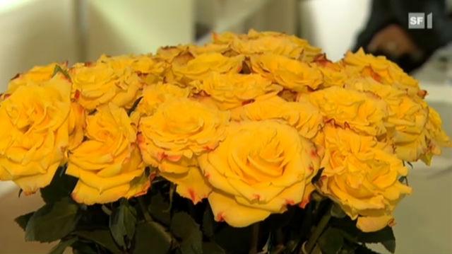 In Afrika blüht der unfaire Rosen-Handel