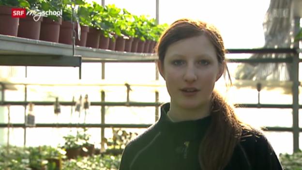 Video «Berufsbild: Gärtnerin EFZ» abspielen