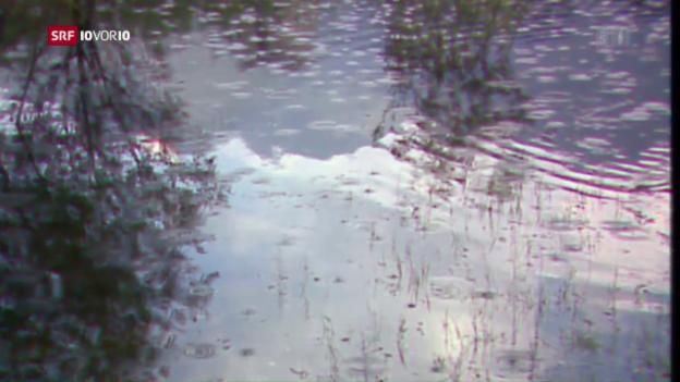 Video «Mückenplage auch in der Schweiz» abspielen