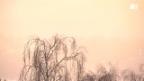 Video «Donnergrollen nach Einstellung der Biowetter-Prognosen» abspielen
