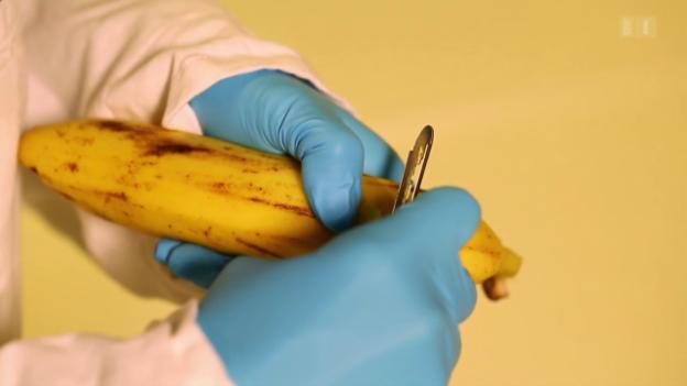 Video «Bananen gegen Hautkrebs» abspielen