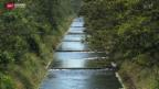 Video «Wasserbezug für die Landwirtschaft im Kanton Solothurn rationiert» abspielen