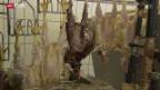 Video «Der Lebenszyklus eines Masthuhns» abspielen