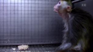 Video «Katalonien, Affenversuche, Thomas Heiniger, Raubkunst» abspielen
