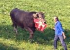 Video ««Einstein» wills wissen: Was sieht der Stier, wenn er rot sieht?» abspielen