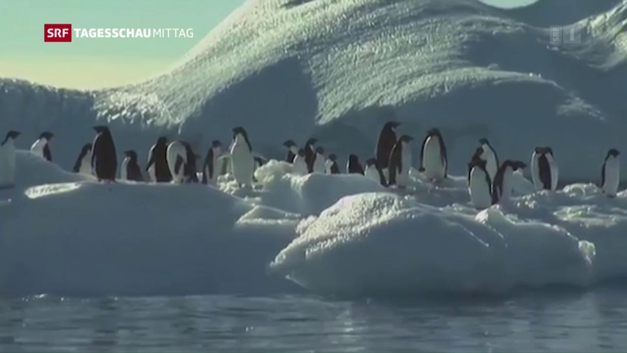 Meeresschutzgebiet in der Antarktis
