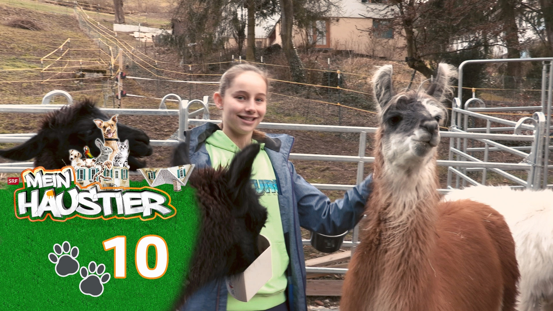 Lia und ihre sechs Lamas