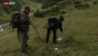Video «Calanda-Wölfe auf der Pirsch» abspielen