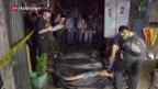 Video «Drogenmorde in den Philippinen» abspielen