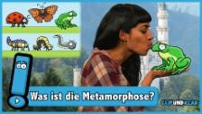 Video «Was ist die Metamorphose?» abspielen