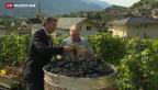 Video «Pessimistische Weinbauern im Wallis» abspielen