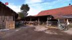 Video «FOKUS: Sinkendes Einkommen in der Landwirtschaft» abspielen