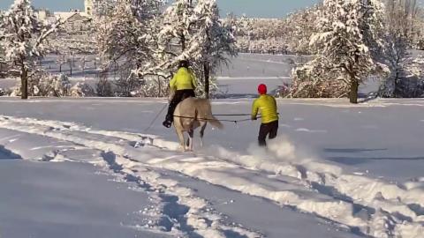 Skijöring im Flachland, #SRFAugenzeuge Annina Rohner, Steinmaur/ZH