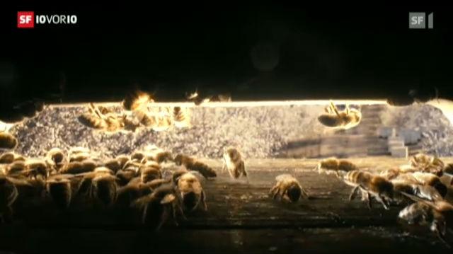 «More than Honey»