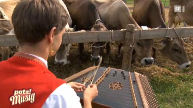 Video «Sennsationell: An der Viehschau im Appenzellerland» abspielen