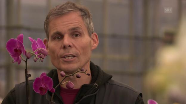 orchideen so pflegt man sie richtig sendungen srf. Black Bedroom Furniture Sets. Home Design Ideas