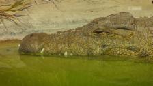 Link öffnet eine Lightbox. Video Harnas – Krokodile an der Angel abspielen.