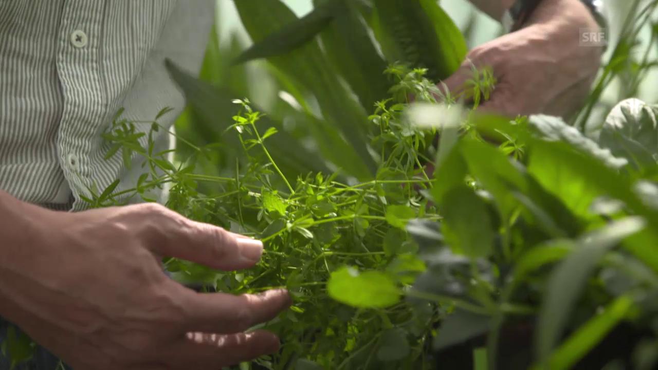 Der Mix macht's – mehr Biomasse als bei Monokulturen (Nano/3sat)