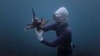 Video «Ama-San - Die Frauen des Meeres» abspielen