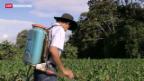 Video «Massnahmen gegen Bienensterben gefordert.» abspielen