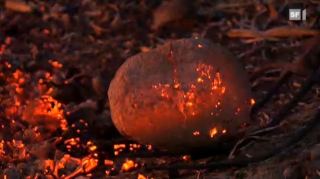 Video «Das Versuchskaninchen in der Schwitzhütte» abspielen