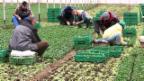 Video «Zuwanderung ohne Ende» abspielen