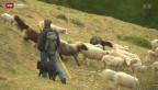 Video «Vorbereitung auf den Bär» abspielen