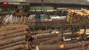Video «Waldwirtschaft schlägt Alarm» abspielen