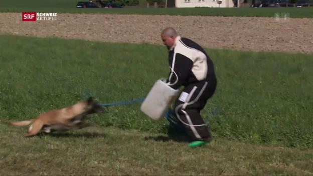 Video «Polizeihunde Schweizermeisterschaft» abspielen