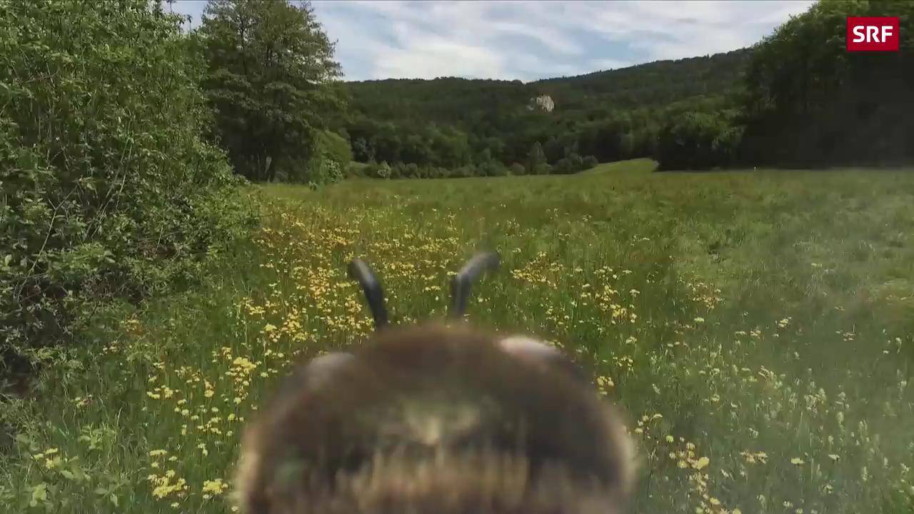 Die Bienenmörderin