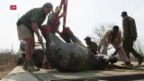 Video «Elefanten umsiedeln, statt ausrotten» abspielen