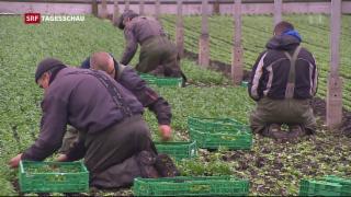 Video «Zuwanderung aus der EU nimmt weiter ab» abspielen