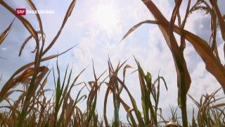 Video «Staatshilfe für Bauern» abspielen