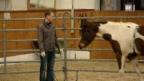 Video ««Einstein» als Pferdeflüsterer» abspielen