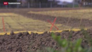 Video «Freilandversuch mit gentechnisch verändertem Weizen» abspielen
