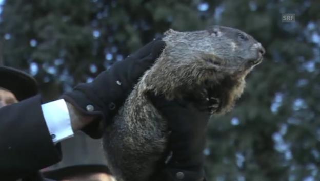 Video ««Punxsutawney Phil» sagt Winterende voraus (engl.)» abspielen