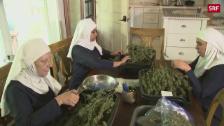 Link öffnet eine Lightbox. Video Diese «Nonnen» bauen Cannabis an abspielen