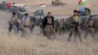 Video «Grossoffensive gegen Mossul» abspielen